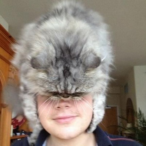 Юмор головной убор, кот, котейка, на голове