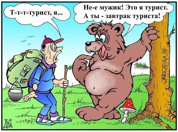 Фото онлайн медведь, рисунок, смешная картинка, турист