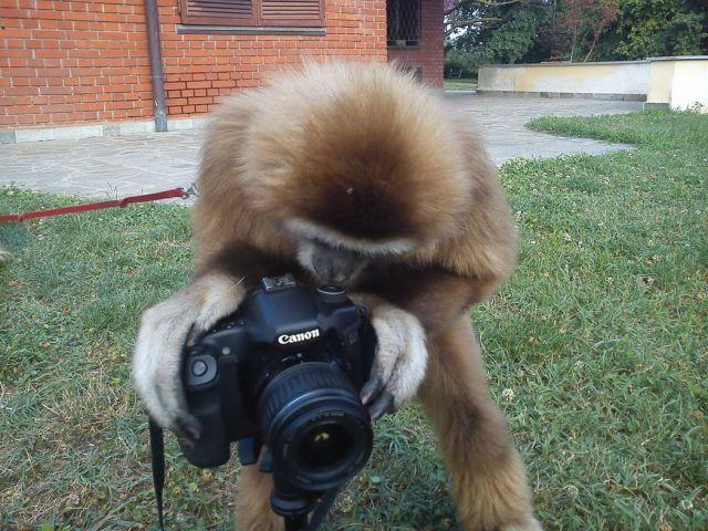 Фотоприкол обезьяна, прикол, фотоаппарат, фотограф