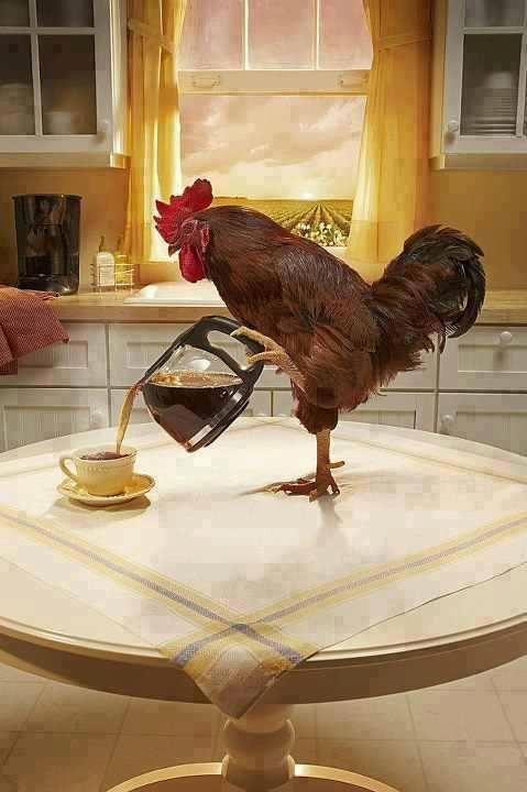 Фотоальбом завтрак, кофейник, курица, наливает, петух