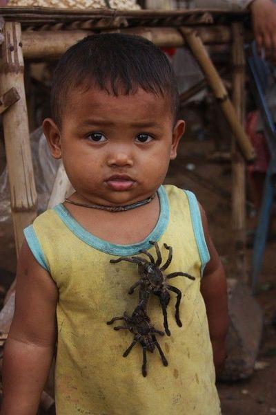 паук, тарантул, камбоджа