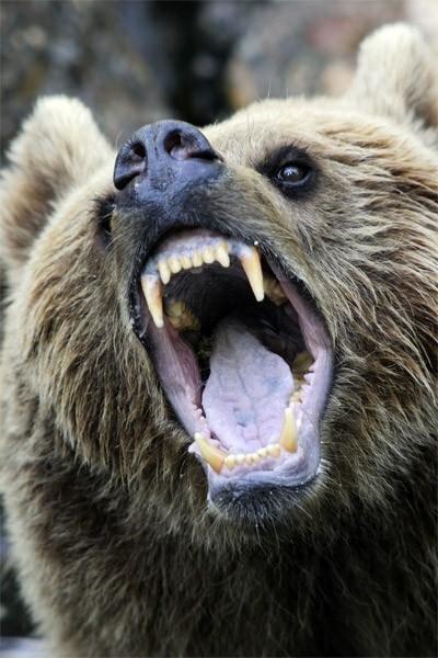 Зевающие животные (63 фото)