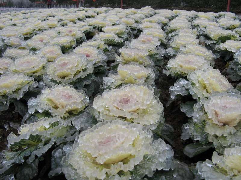 http://de.fishki.net/picsw/032008/28/ice_rain/006_ice_rain.jpg
