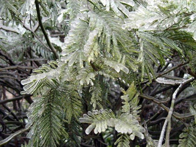 http://de.fishki.net/picsw/032008/28/ice_rain/tn.jpg