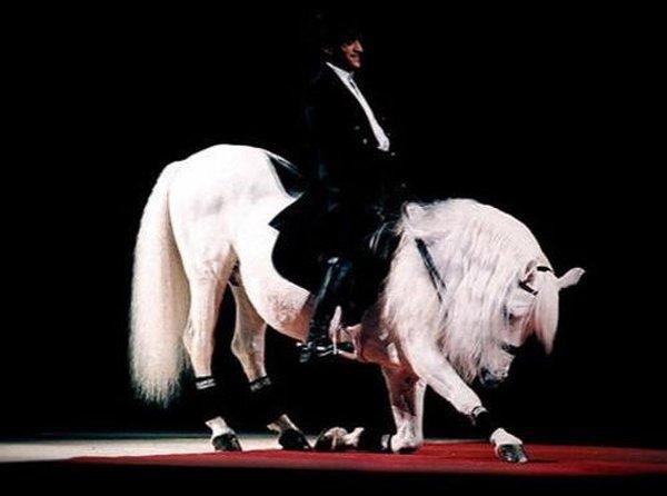 Ученые утверждают, что лошади редчайшей породы саррайа - прямые потомки дикий лошадей Южной Иберии. Всего в мире осталось только 200 таких лошадок. А вот по характеристикам и качествам самой редкой породой считается выведенная для военных целей австрийская порода липиззанер. Цена за одну такую лошадь доходит до 100 тысяч долларов.