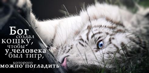 http://ru.fishki.net/picsw/032009/02/quote/052.jpg