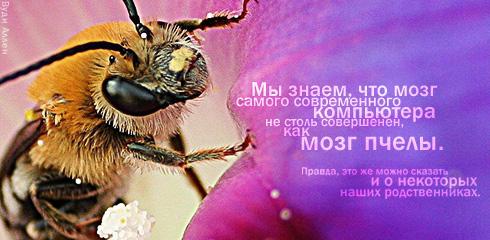 http://ru.fishki.net/picsw/032009/02/quote/055.jpg