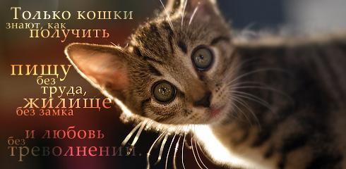 http://ru.fishki.net/picsw/032009/02/quote/059.jpg