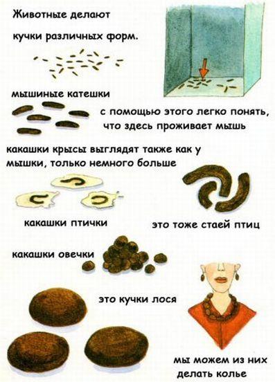 http://ru.fishki.net/picsw/032009/04/kaka/003.jpg