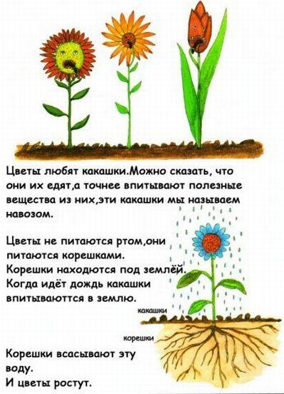 http://ru.fishki.net/picsw/032009/04/kaka/008.jpg