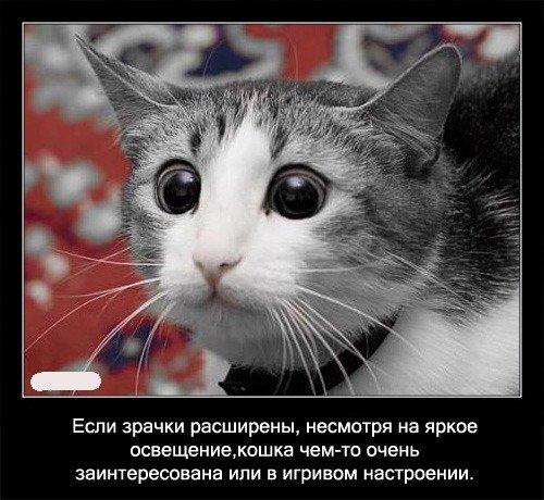 Про кошек (56 фото)