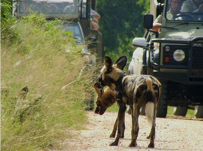 Национальный парк Крюгер (52 фото)