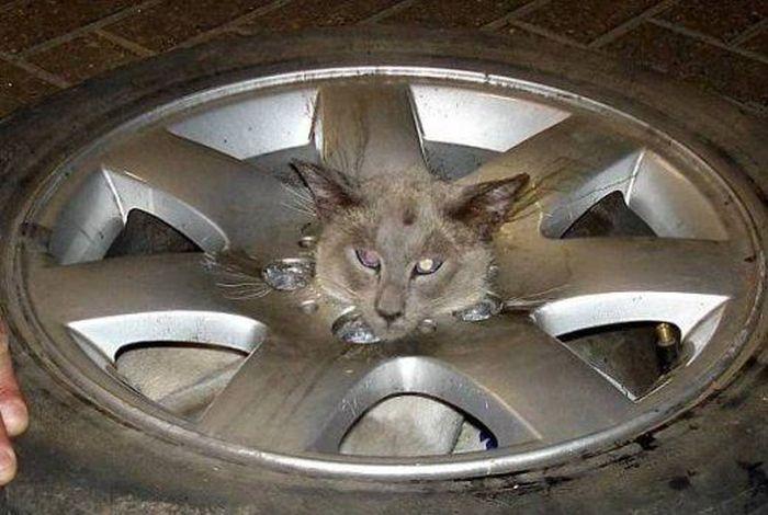 Спасение кошки (5 фото)