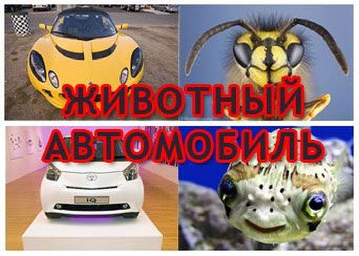 Животные автомобили! Всем смотреть :) (35 фото)
