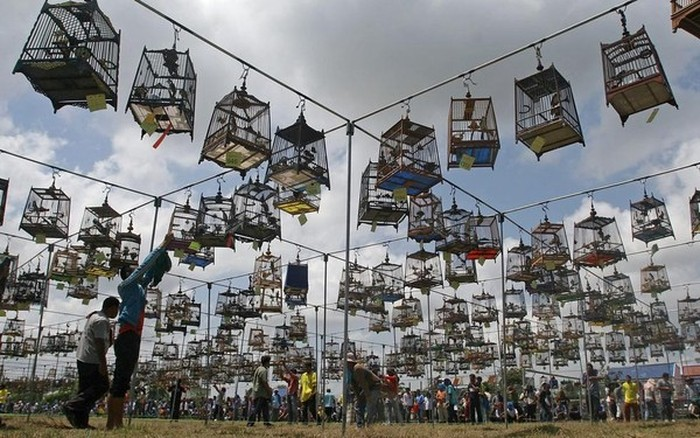 Конкурс пения птиц (11 фото)