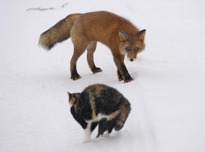 О кошках... (6 фото)
