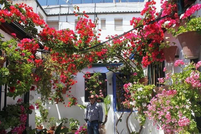 Фестиваль цветов в Кордове (27 фото)