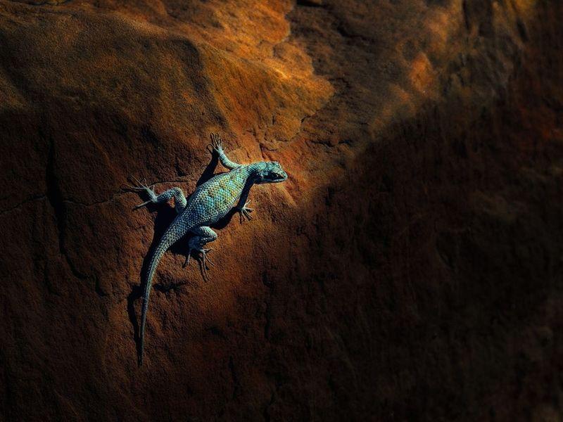 2. Ящерица в лучах утреннего солнца в национальном парке. (Olaf Dziallas)