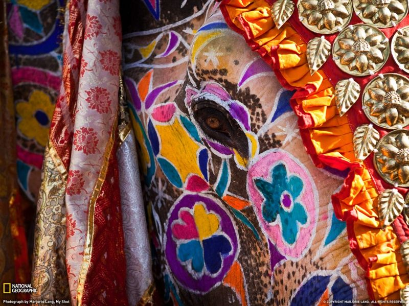 3. Фестиваль слонов – один из самых популярных фестивалей в Джаипуре, который проходит на стадионе Чауган в марте. Он начинается с красивой процессии украшенных слонов, верблюдов, лошадей и танцоров. Погонщики с гордостью раскрашивают своих слонов в яркие цвета и наряжают их в стеганые одежды и украшения. (Marjorie Lang)