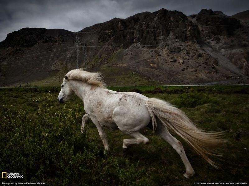8. Пришлось побегать за лошадкой, чтобы сделать это фото. (Johann Karlsson)