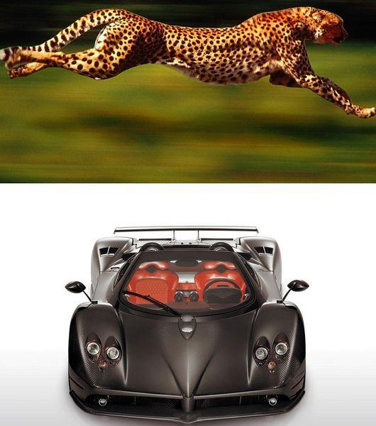 Самые быстрые животные поспорят с суперкарами! (текст)