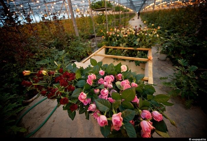 Праздник цветов (19 фото)