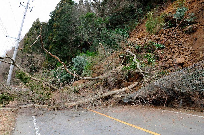 Упавшие на дорогу деревья после оползня недалеко от Иваки. (REUTERS/KYODO)
