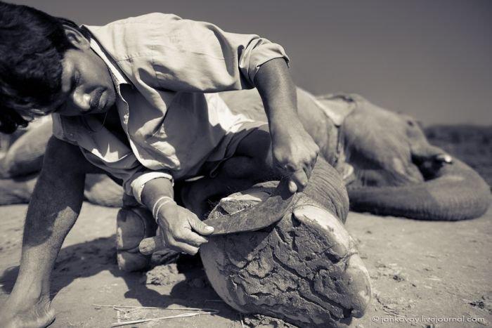 Слоновий педикюр (5 фото)