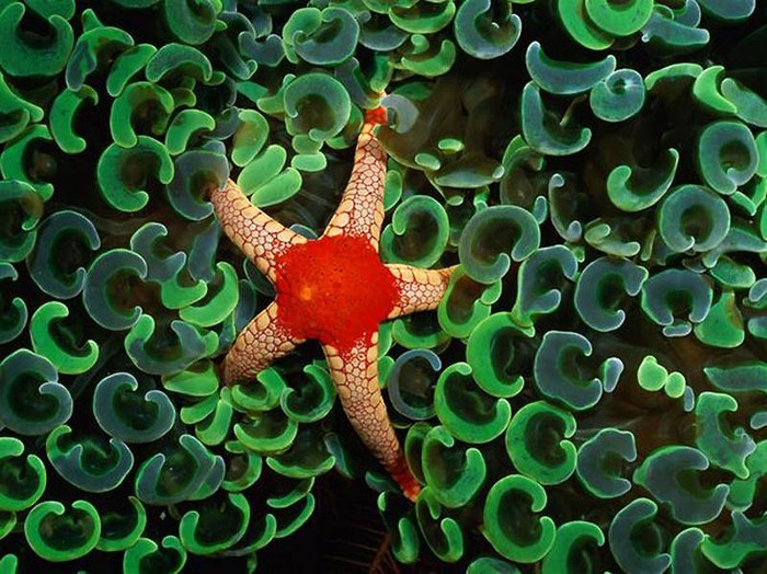 Узоры природы: Морские создания (17 фото)