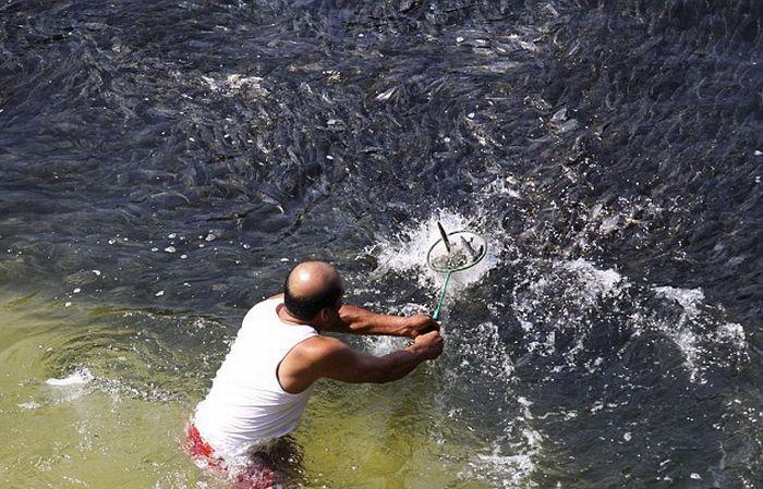 Необычное скопление рыбы в Акапулько (Мексика) (6 фото)