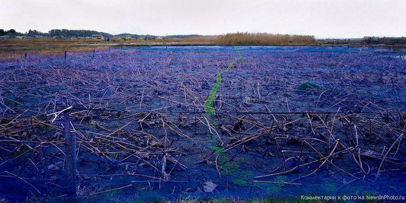 2. Его снимки наводят на размышления о «готовом» искусстве. Его интересуют скульптурные качества придорожных объектов.<br>  Синее поле (Blue Field)<br>  Япония, 2004 год.