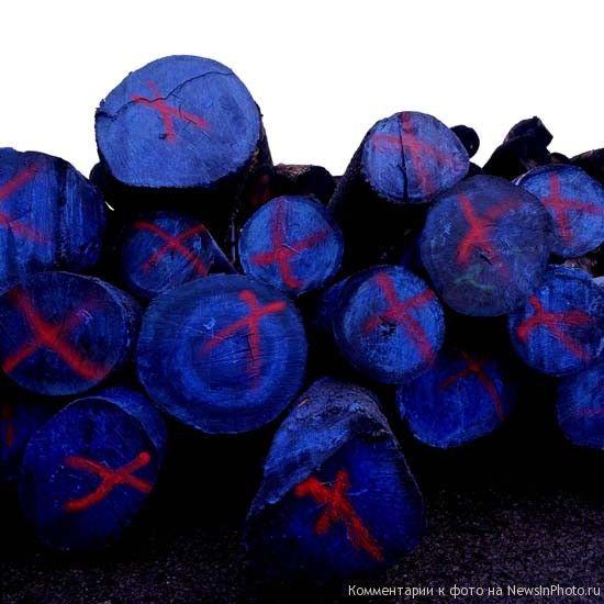 16.Синее дерево с красным крестом (Blue Wood with Red Cross)<br>  2001 год.