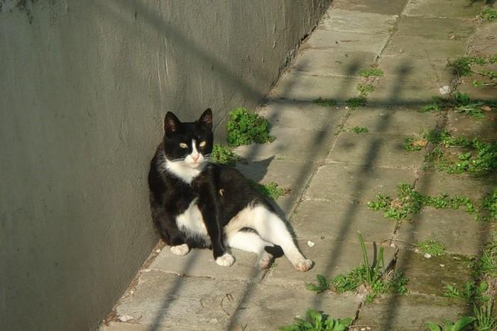 Подборка сидящих котов (22 фото)