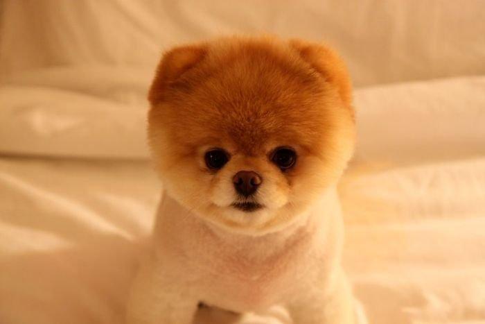 Самая популярная собака на Facebook (50 фото)
