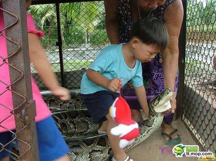 Поход в зоопарк по азиатски (8 фото)