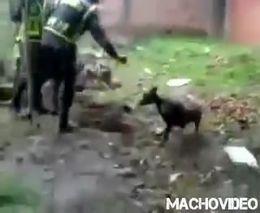 Колумбийская полиция и собака