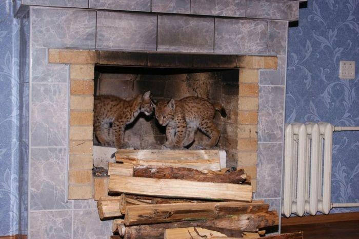 Разнообразие диких животных в одном доме (68 фото)