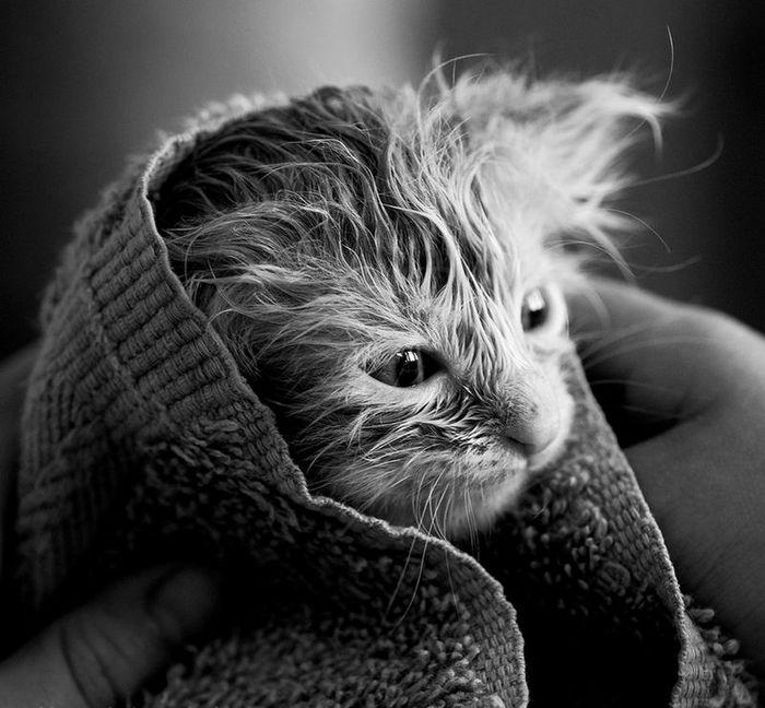 20 удивительных фотографий кошек (20 фото)