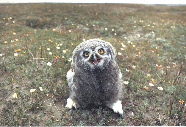 Улыбка в мире животных (26 фото)