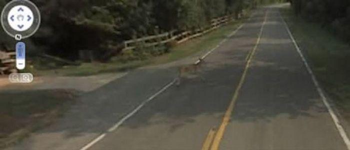 Необычные кадры на Google Street View (3 фото)
