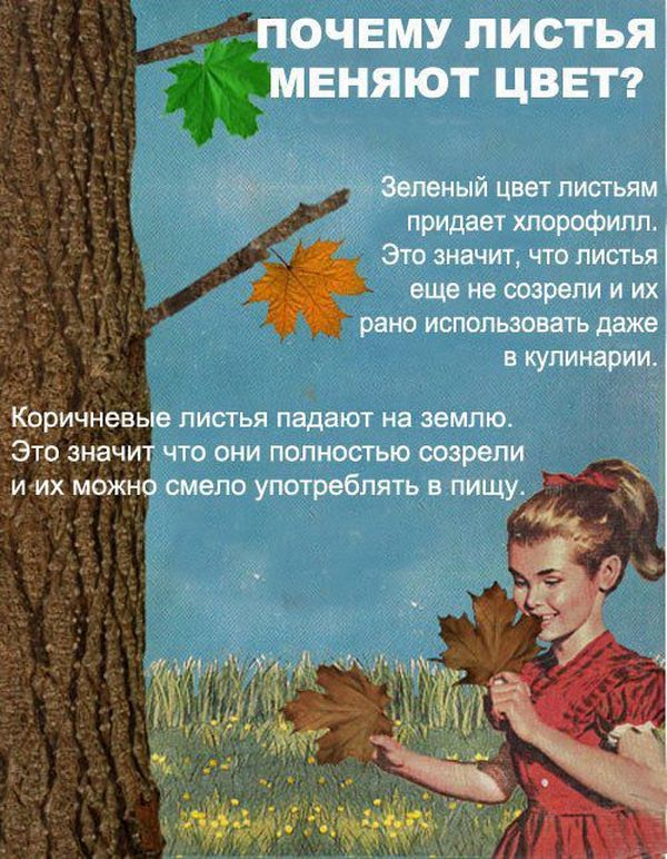 Интересные факты о природе для детей с картинками