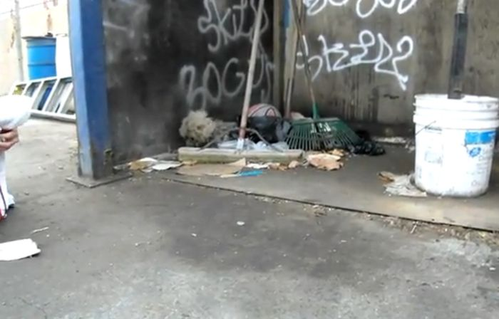 Спасение бездомного песика (видео)