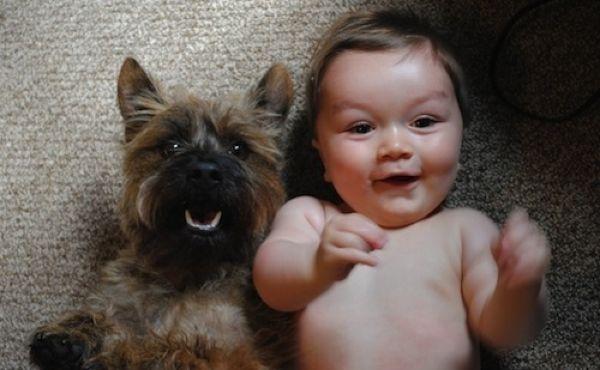 Собака может быть лучшим другом ребенка (23 фото)