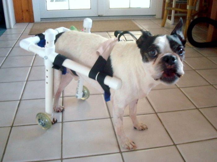 Инвалидная коляска для таксы своими руками 100
