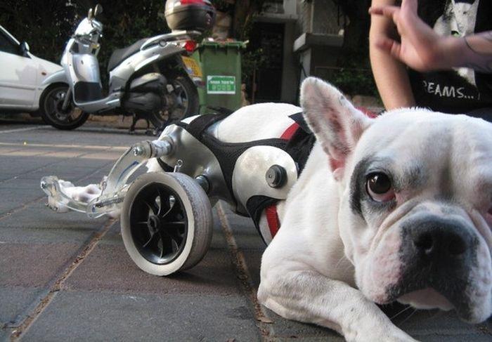 Очень сильные собаки (21 фото)
