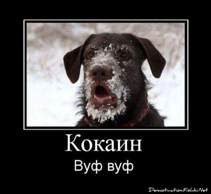 http://ru.fishki.net/picsw/032012/30/post/dem/dem-0008.jpg