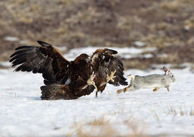 La caza con águilas en Kazajistán 1