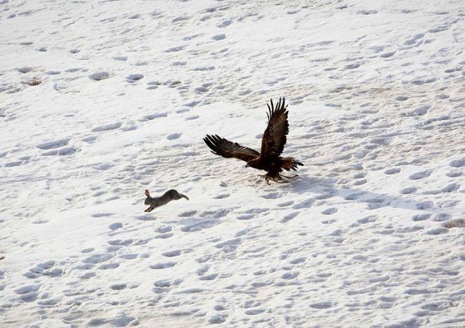 La caza con águilas en Kazajistán 2