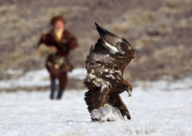 La caza con águilas en Kazajistán 3
