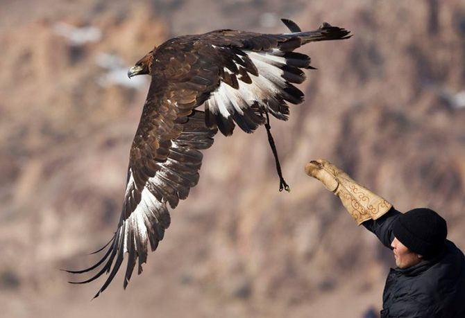 La caza con águilas en Kazajistán 5